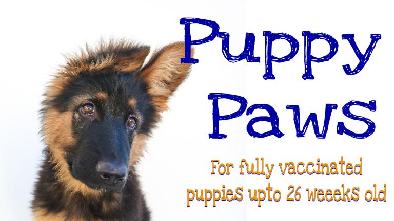 Great Paws Dog Training Puppy Training in Darlington Middlesbrough Stockton Yarm Wynyard Hartlepool Sedgefield Durham