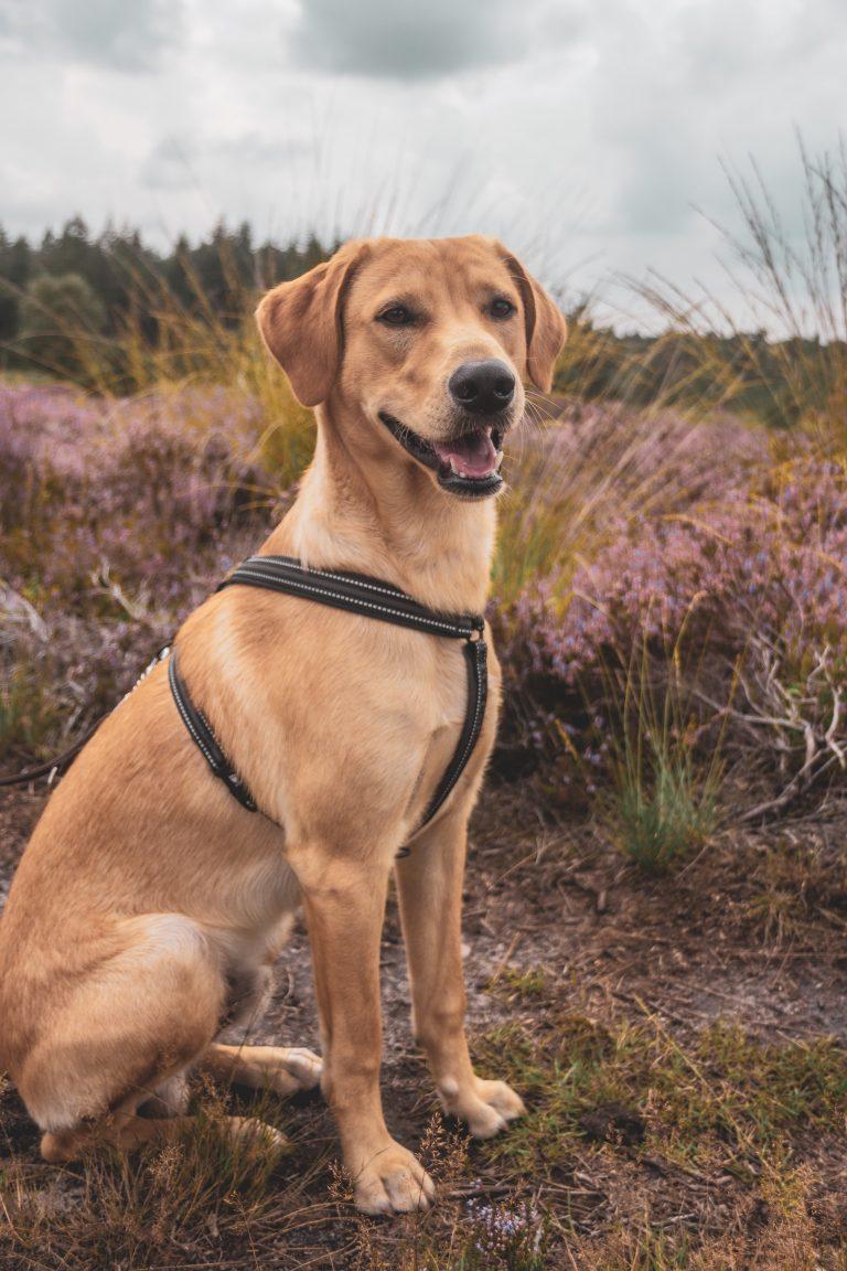 Dog Training Puppy Training in Darlington Middlesbrough Stockton Yarm Wynyard Hartlepool Sedgefield Durham