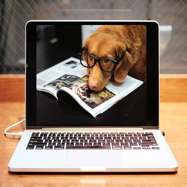 Great Paws Online Courses